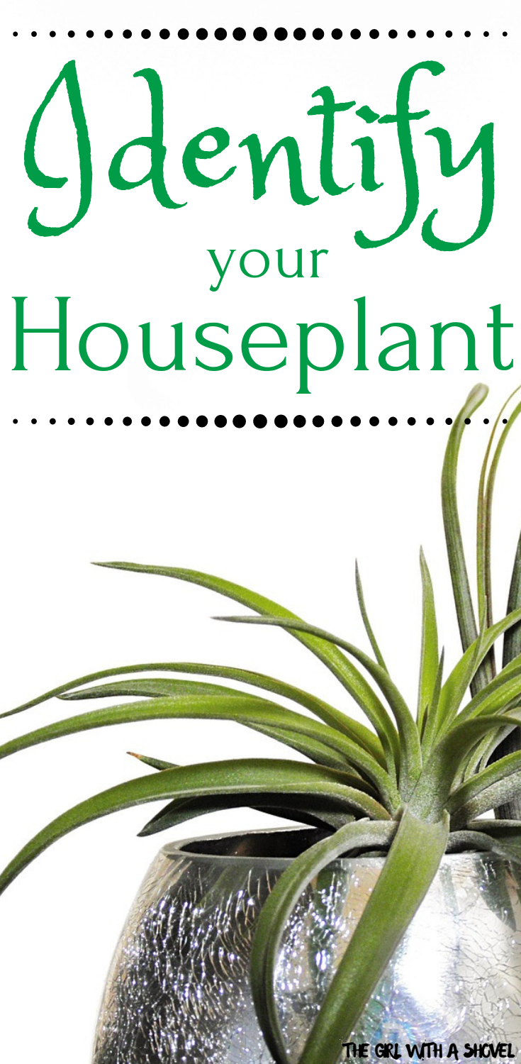 Top Websites For Indoor Plant Identification Plant Identification Identifying House Plants House Plants