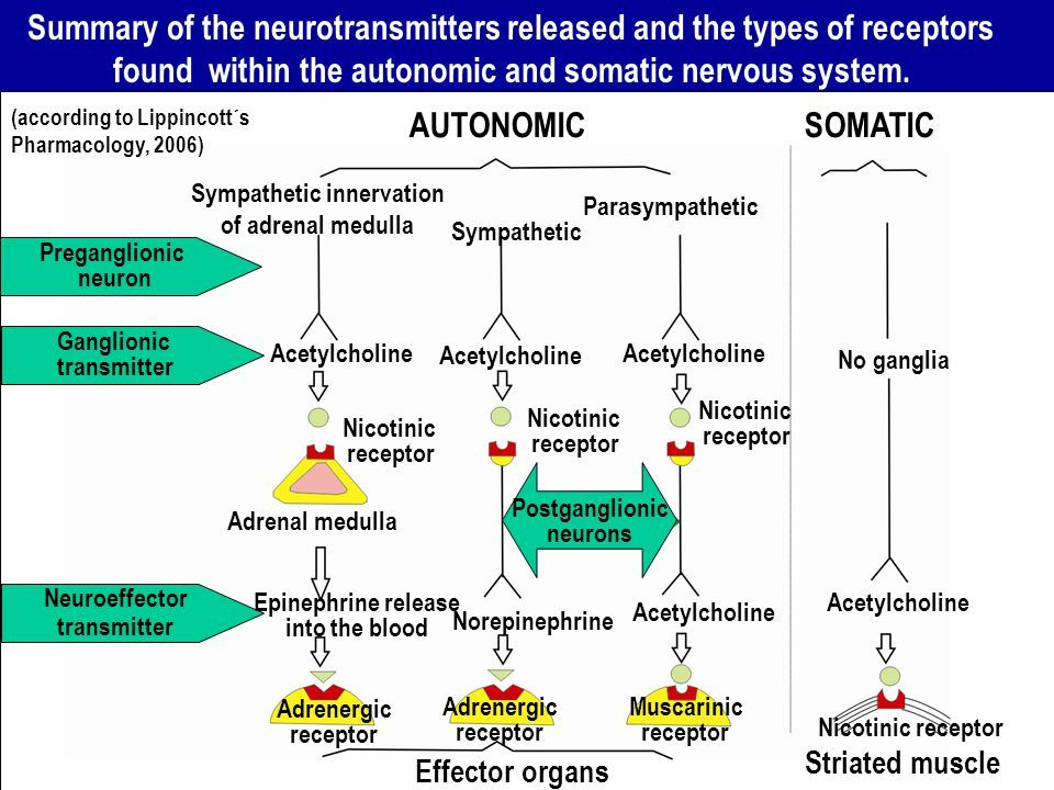 Image result for parasympathetic receptor | Ra | Autonomic ...