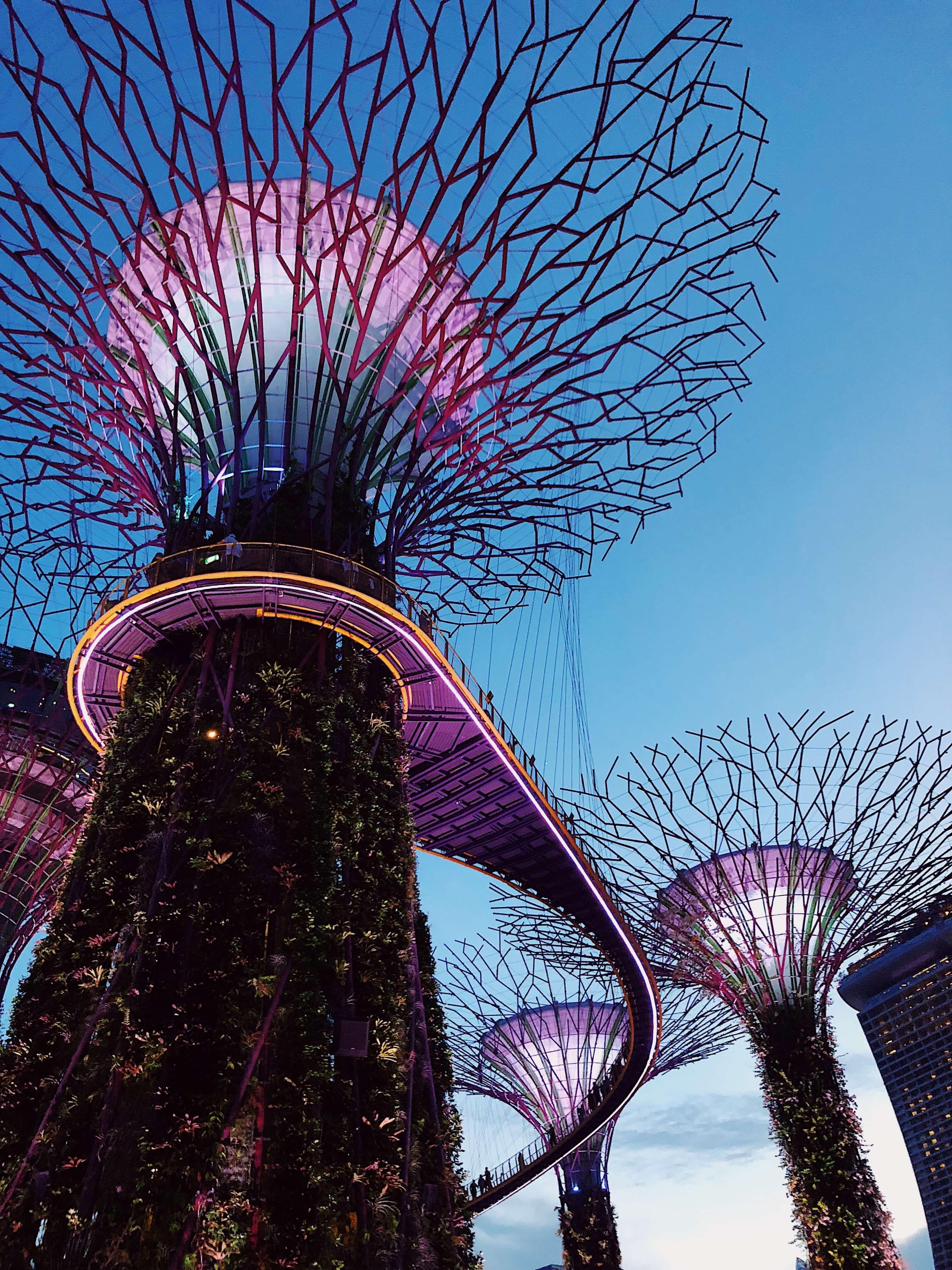 8b2cdcdc96e71d90f1fd70cd8f581aa0 - Supertree Grove Gardens By The Bay Singapore