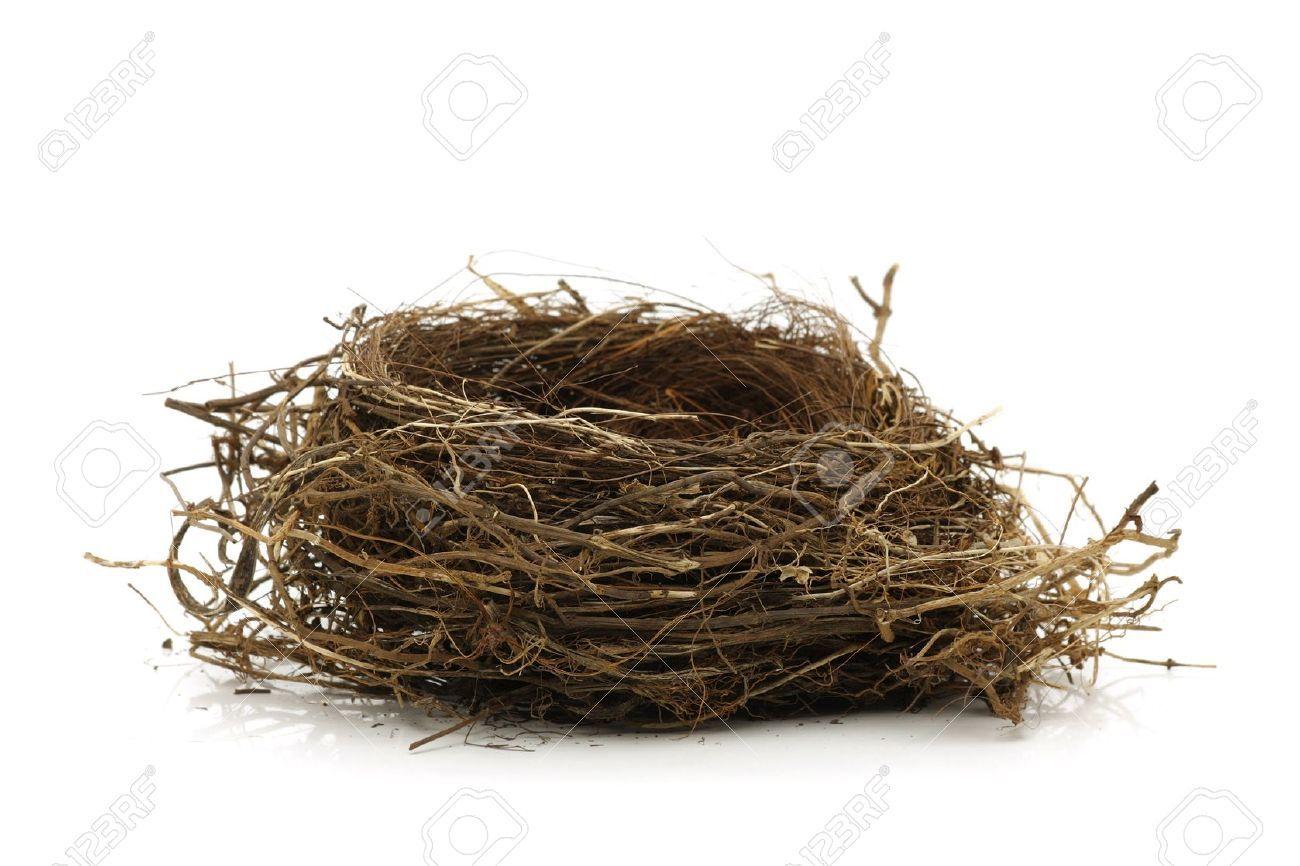 Bird Nest Images Stock Pictures Royalty Free Bird Nest Photos And Stock Photography Nest Images Birds Nest Image Bird Nest
