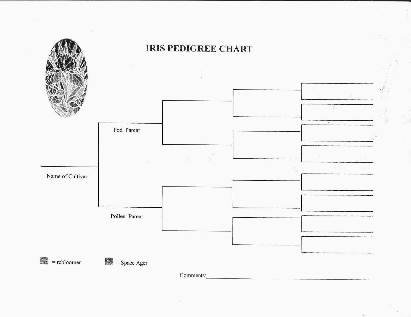 Blank Pedigree Chart Printable Pedigree Chart Family Tree Chart