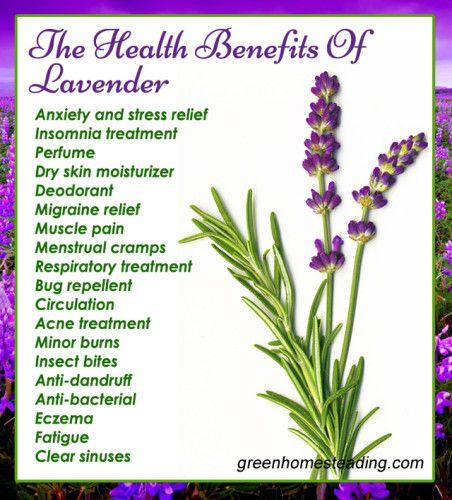Easy 4 Ingredient Lavender Lemonade A Natural Solution For