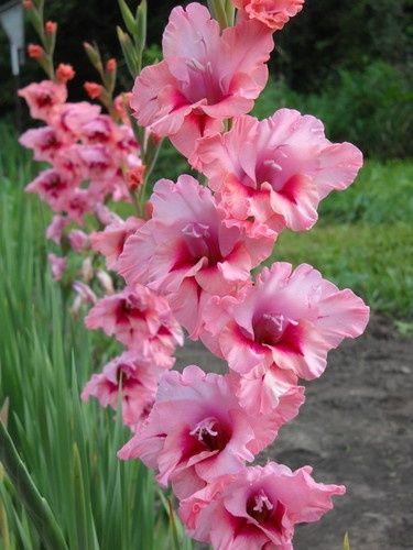 Pin On Flowers Fleurs