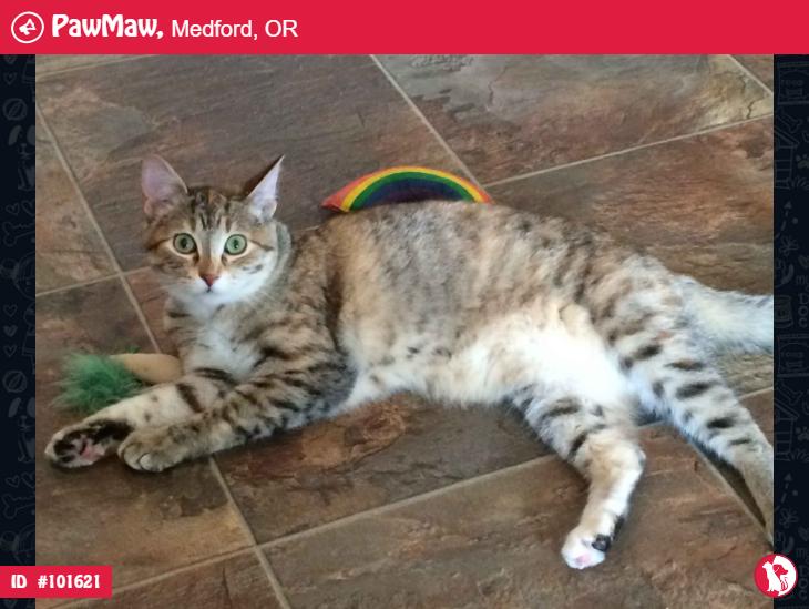 Help Mara Is Lost Cat Colors Pets Losing A Pet