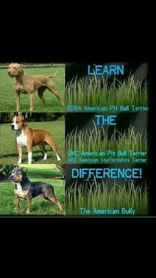 Pin By Teri Haase On Learn The Difference Between Apbt And