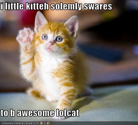 You are now part of my lolcatz collection. Kittens