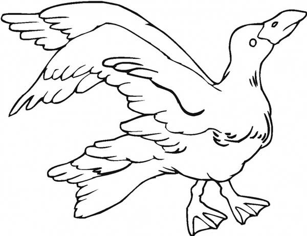 Pin By Netart On Seagull Coloring Pages Coloring Pages Bird Drawings Coloring Pictures
