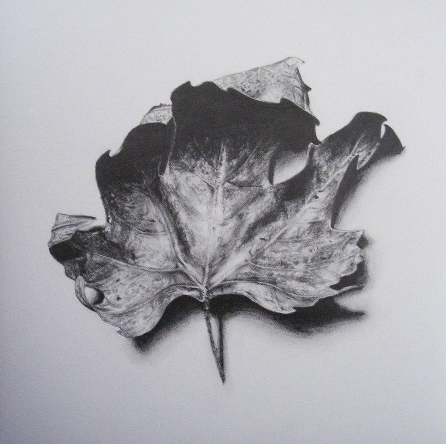 Leaf by Melinda Alice Kierre, graphite pencil, 2008