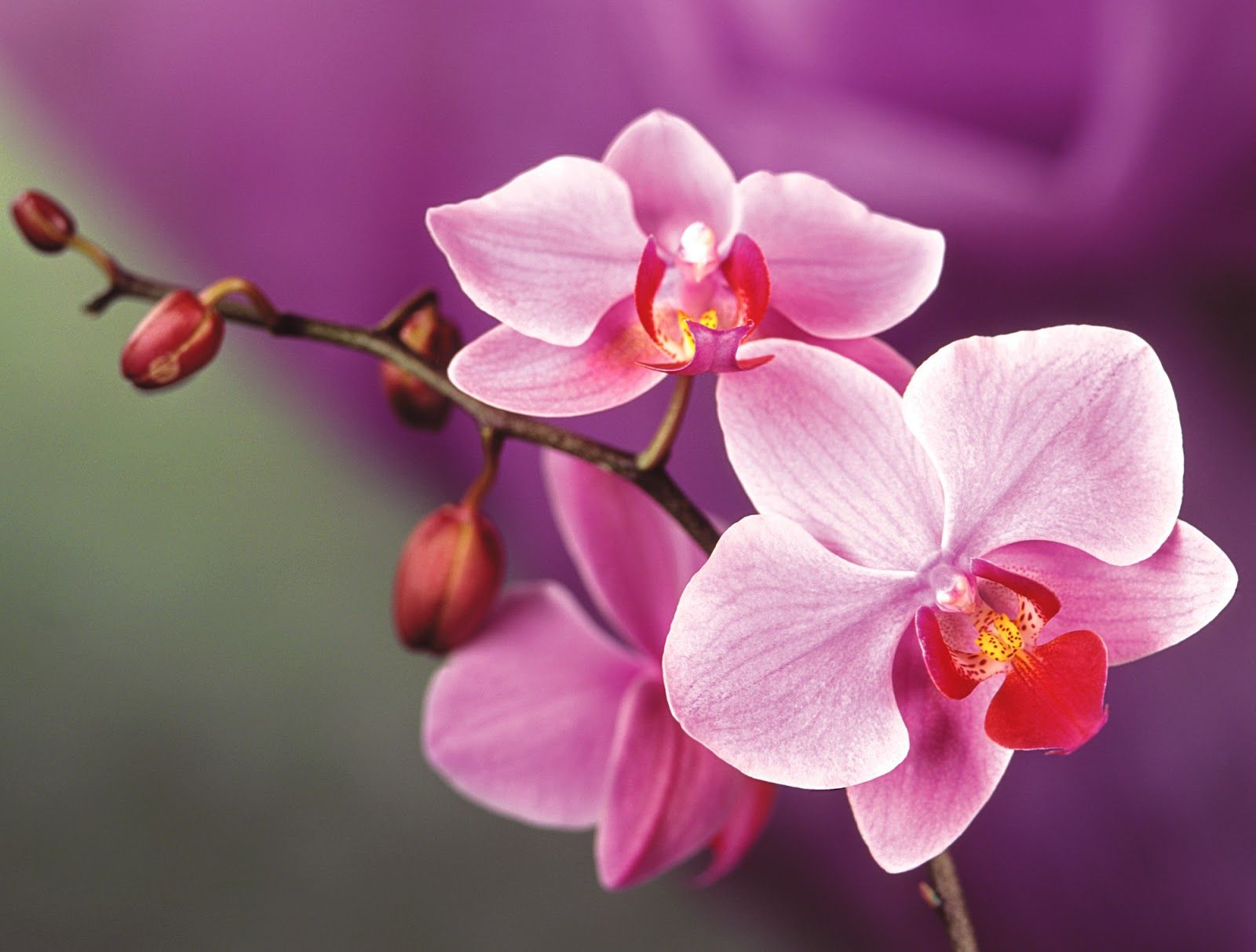 Hq Orchids Flower Photography Free Stock Image Jpg 1600 1213 Orchid Flower Orchid Wallpaper Flower Wallpaper