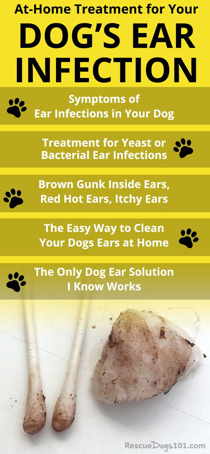 The Secret To Getting Rid Of Ear Infections In Your Dog At Home Dogs Ears Infection Cleaning Dogs Ears Dog Treatment