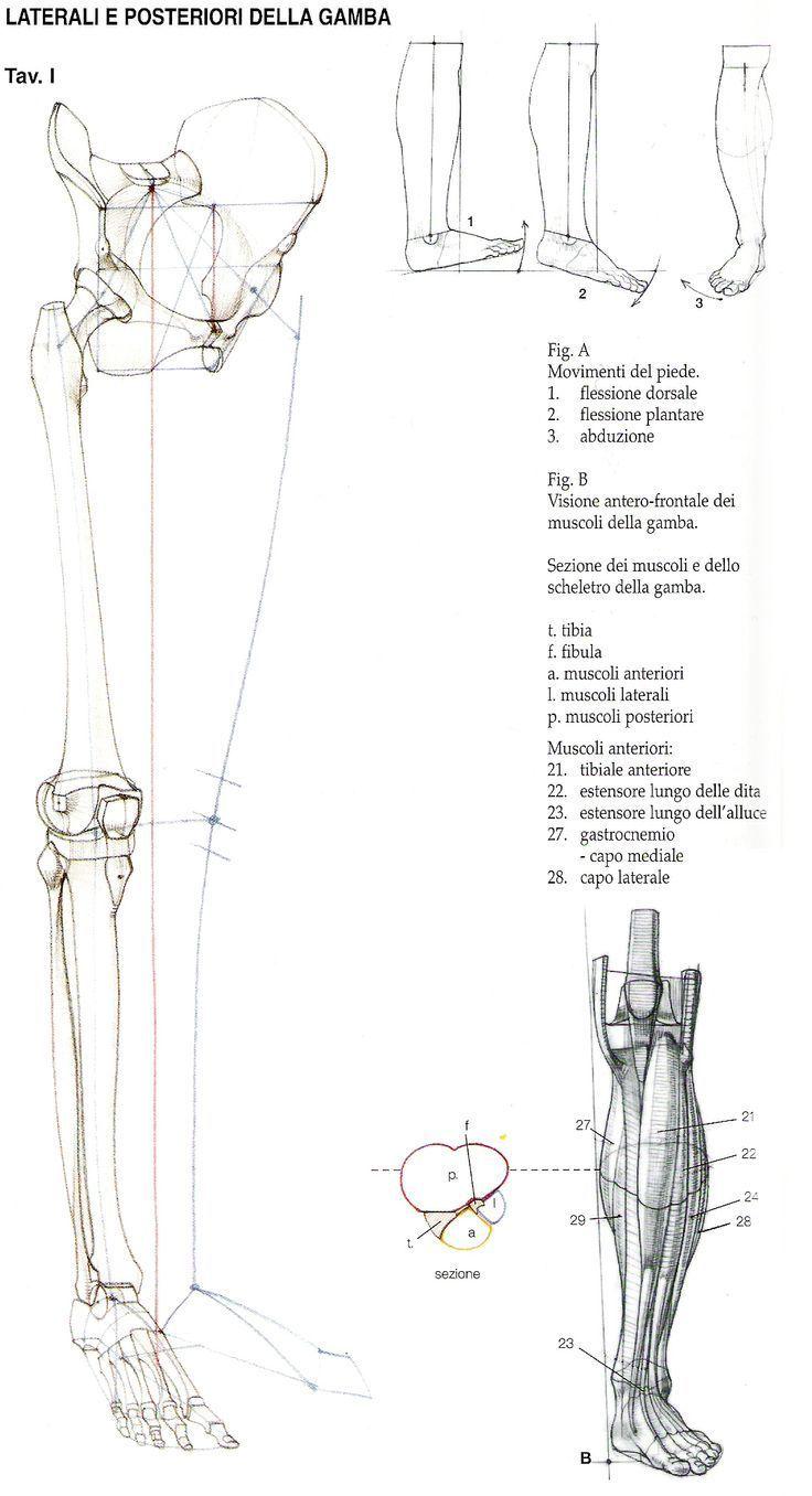 Учебник цифрового рисунка | Ardezart™ | anatomía | Pinterest ...