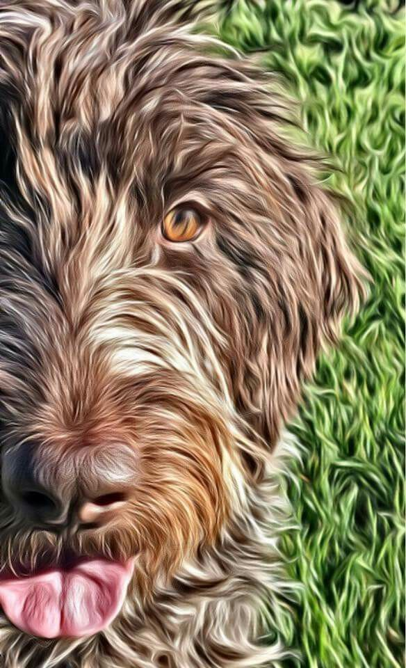 Wirehaired Pointing Griffon Dog Artwork Dog Paintings Puppy Art
