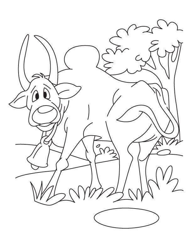 Free Printable Ox Dont Dare Attacking Back Coloring Pages And