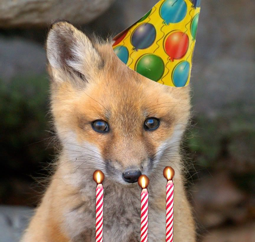 happy birthday fox Happy Birthday LittleKagsin! | Halforums | Cub Scouts | Pinterest  happy birthday fox