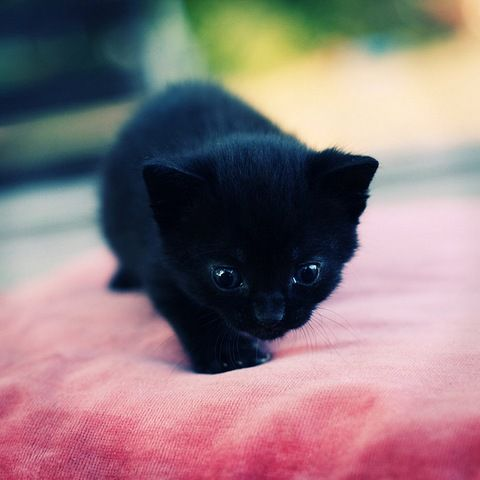 Panterita Animaux Amusants Cute Kittens Animaux Les Plus Mignons