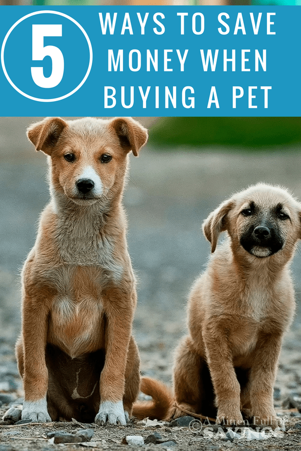 Five Unique Ways To Save Money When Buying A Pet Animal Shelter
