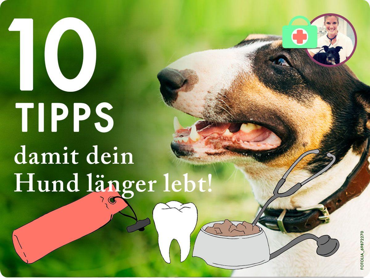 10 Tipps Damit Dein Hund Lange Lebt Ein Gesunder Hund Bis Ins Hohe Alter Dognet De Gesunde Hunde Hunde Hundchen Training
