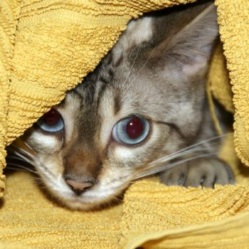 How To Give An Orphaned Kitten A Bath Kittens Pets Diarrhea In Dogs