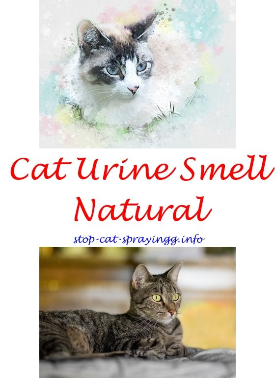 Attrayant My Neutered Cat Sprays How Do You Get Cat Urine Smell Out Of Carpet   Cat  Pee Mom.deter Cats From Spraying Cat Pee Out Of Couch Kittens Cat Urine Ou2026