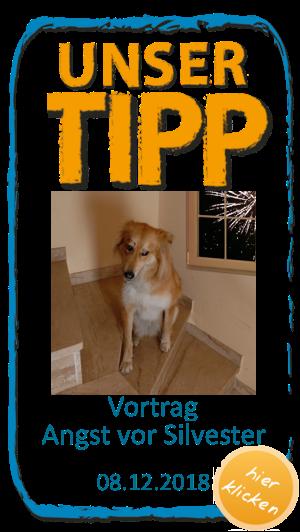Top 10 Hunde Irrtumer Hunde Welpen Terrier Hund