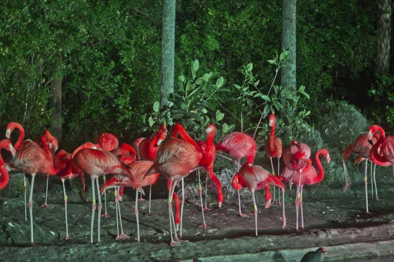 Private Site Pet Birds Miami Night Zoo
