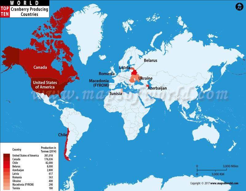 World map of top ten cranberry producing countries cranberry find the world top ten cranberry producing countries map data and video united states of america is the worlds largest producer of cranberry gumiabroncs Choice Image