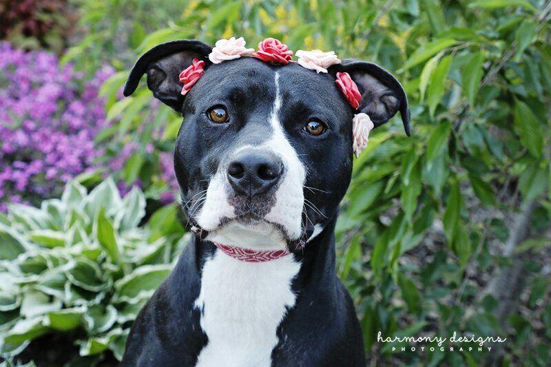 Adopt Daenerys Targaryen on (With images) Dog adoption