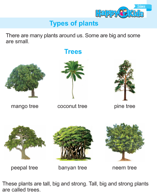 Ukg Science Book Page 19 Trees To