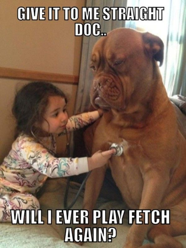 Funny Babies And Kids With Captions Funny Dog Picture Child Playing Doctor Funny Dog Pictures Funny Babies Silly Animals