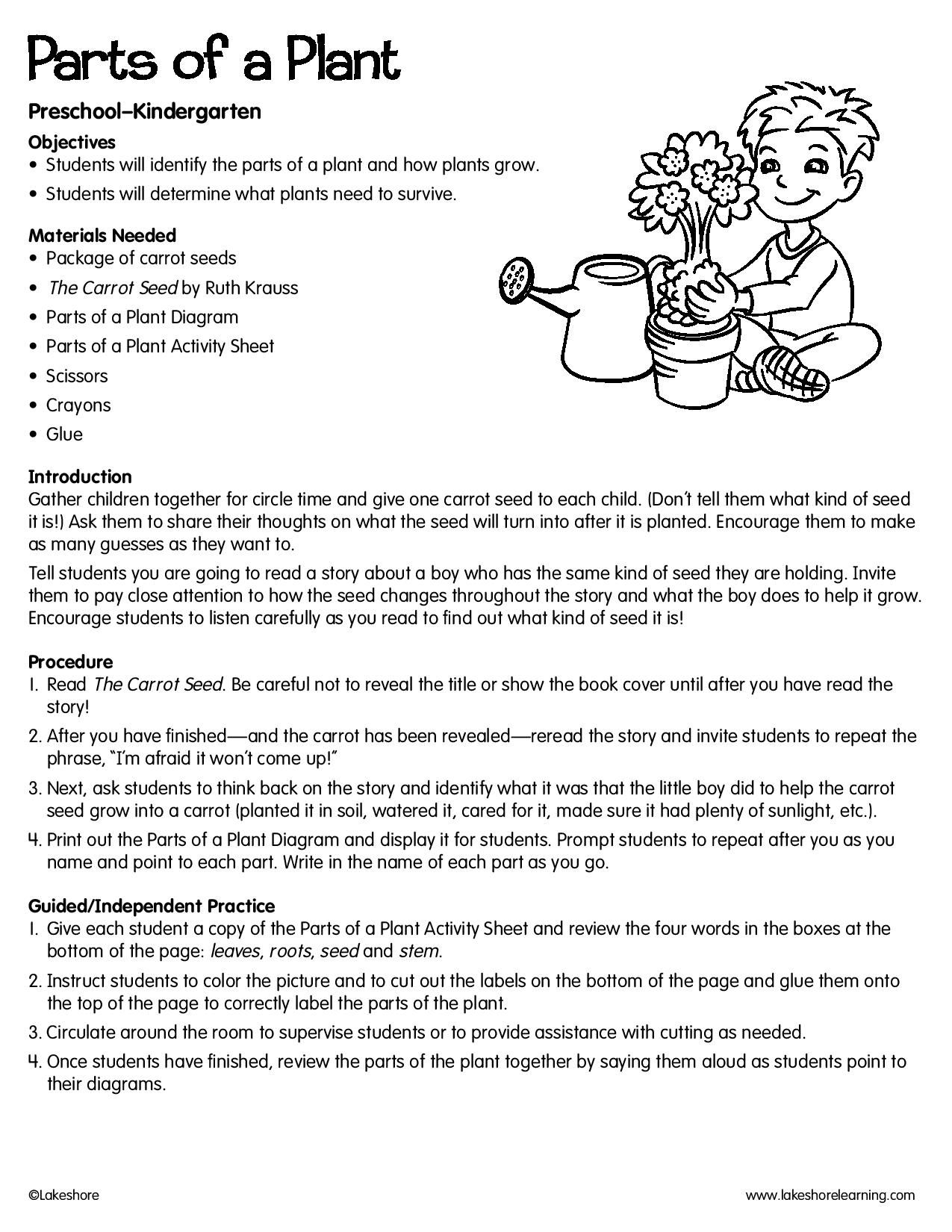 Parts Of A Plant Lessonplan Science Kindergarten Science Lesson Plans Kindergarten Science Lessons Kindergarten Lesson Plans Template [ 1650 x 1275 Pixel ]