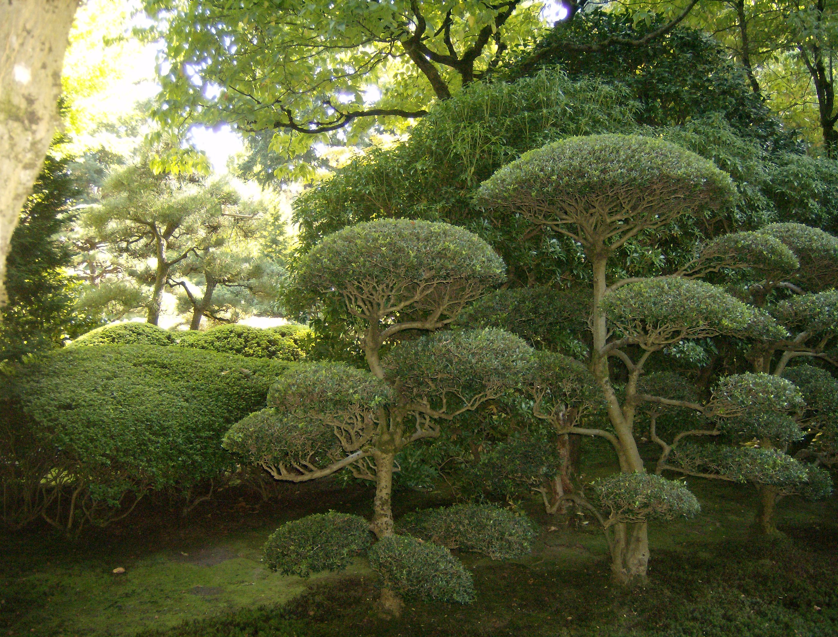 Japanese Garden Plants Japanese Garden In Portland Oregon Carefully Pruned Not A