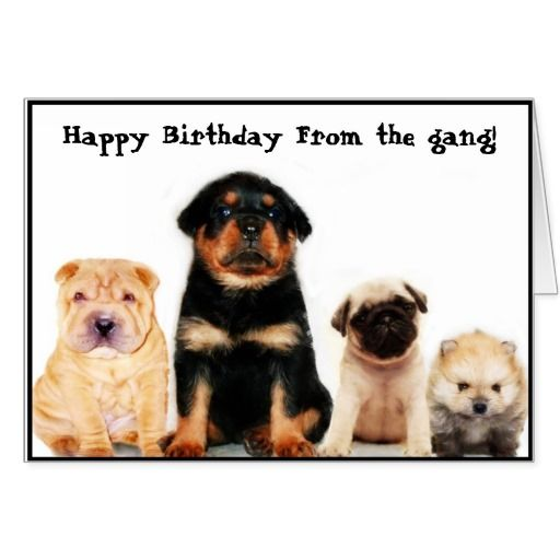 happy birthday from the gang puppies greeting card. Text can be ...