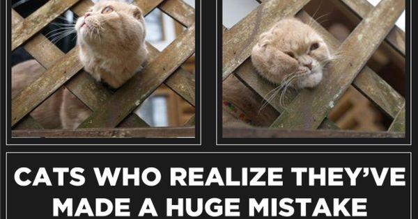 Картинки по запросу animals ha ha