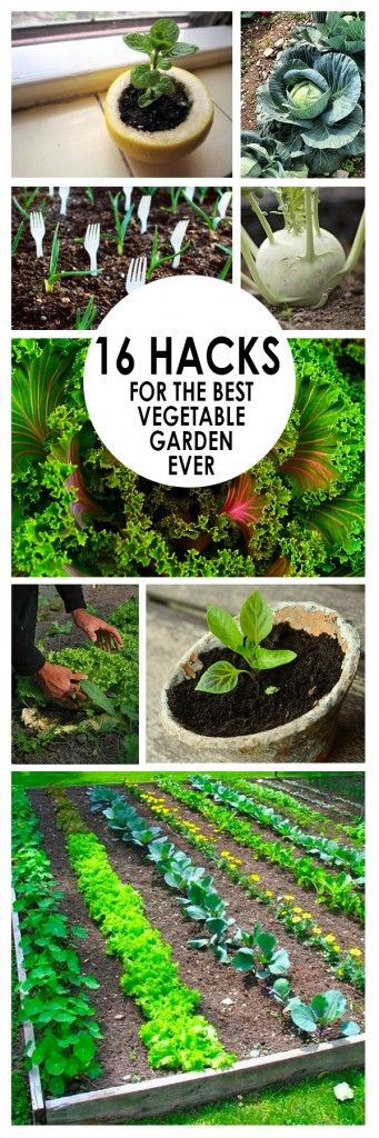 16 Hacks For The Best Vegetable Garden Ever