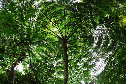 RainForests | Facts For Kids Wild Life u0026 Nature « Kinooze : facts about canopy - memphite.com