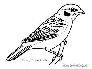 Burung Gereja Burung Gambar Kelinci Warna