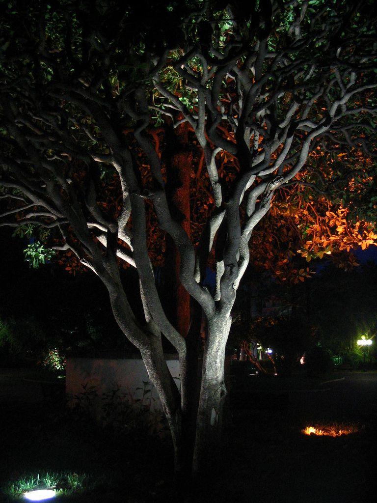 Arbre Eclaire De Nuit Arbres Eclaires Deco Jardin Exterieur