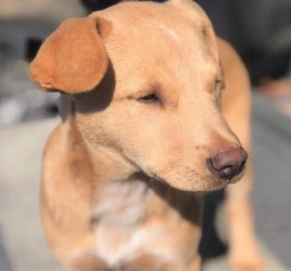 Dogs For Adoption Petfinder Petadoption Pet Adoption Pet Adoption Shelter Dogs In 2020 Dog Adoption Dogs Pet Adoption
