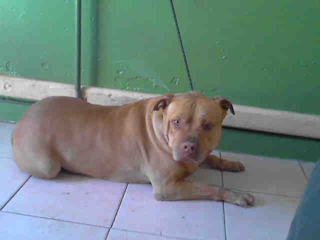 05 17 2016 Super Urgent Senior To Be Destroyed Adopt Pabo