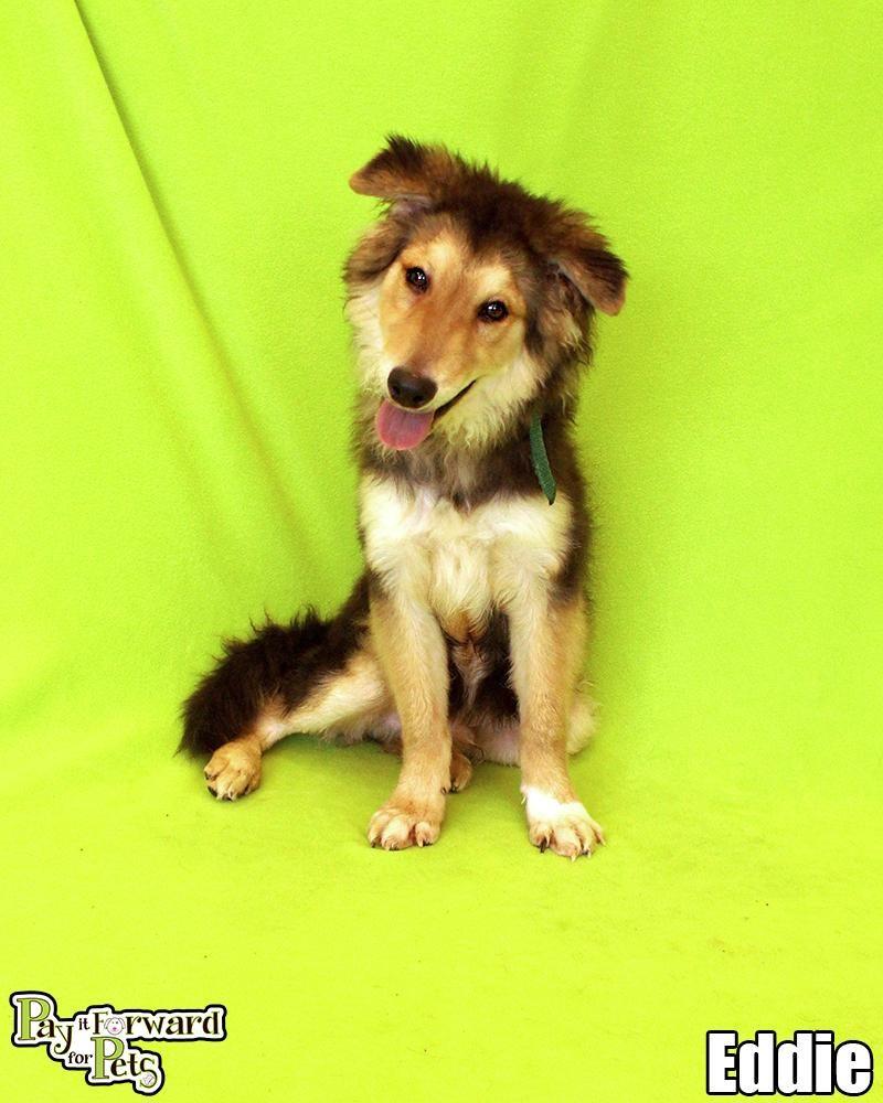 Adopt Eddie On Petfinder Find Pets Dog Adoption Pet Life