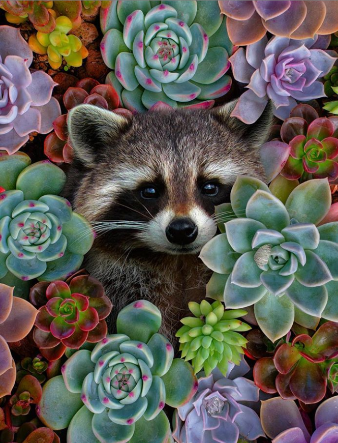 100 Gorgeous Succulent Plants Ideas For Indoor And Outdoor Full Of Aesthetics Page 5 Of 20 Latest Fashion Trends For Woman Cute Animals Animals Cute Raccoon