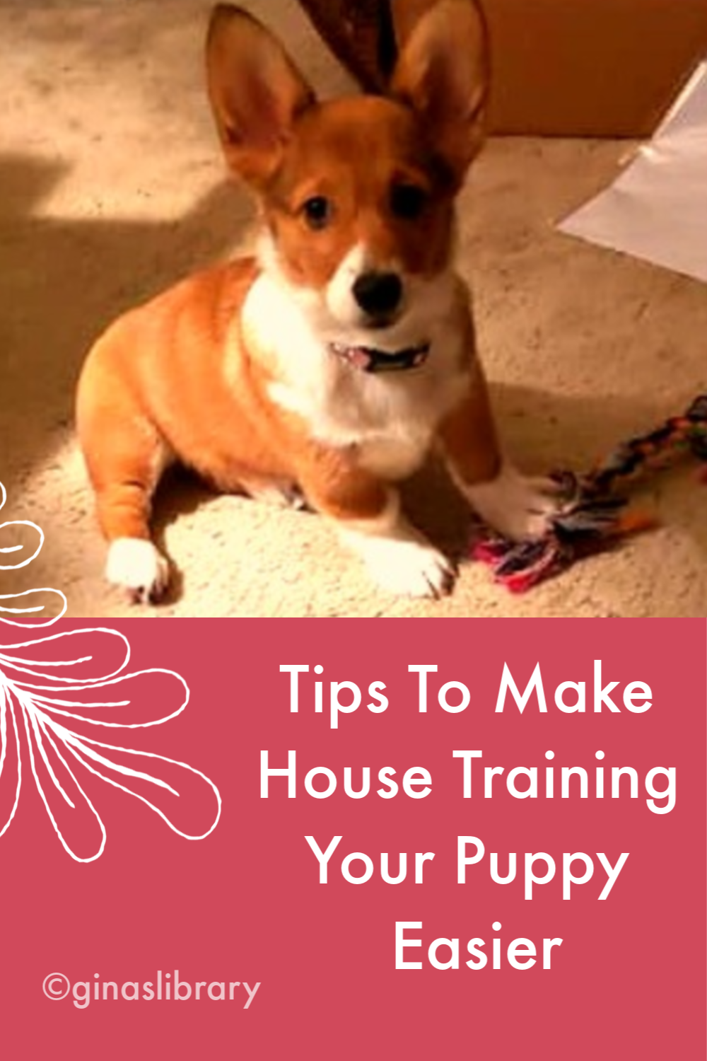 Tips To Make House Training Your Puppy Easier Training Your