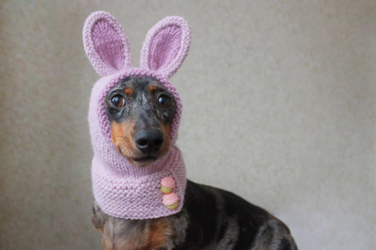 Knitting Pattern Dog Hat Mini Dachshund Bunny Hood Pet Costume