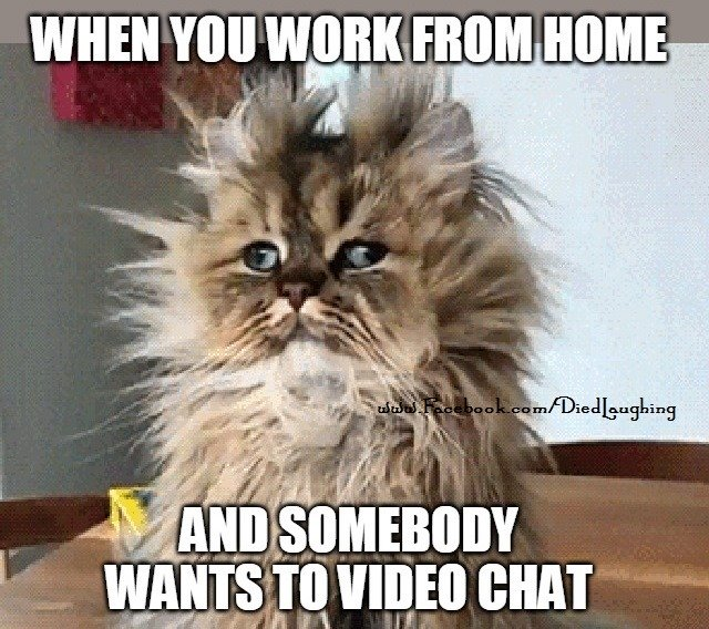 Cat Meme I M Not Playing With You Guys No Mores Google Search Working From Home Meme Funny Images Work Humor