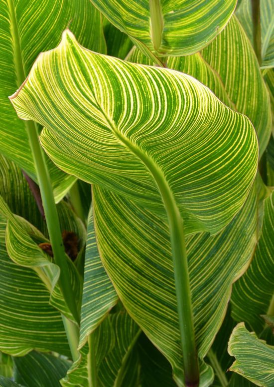 Gorgeous Colour And Line Pattern Found In Nature Natural Form
