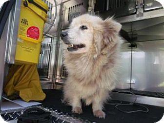 Land O Lakes Fl Cardigan Welsh Corgi Mix Meet A Dog For Adoption Http Www Adoptapet Com Pet 10605910 Land Olakes Florid Corgi Mix Welsh Corgi Mix Pets