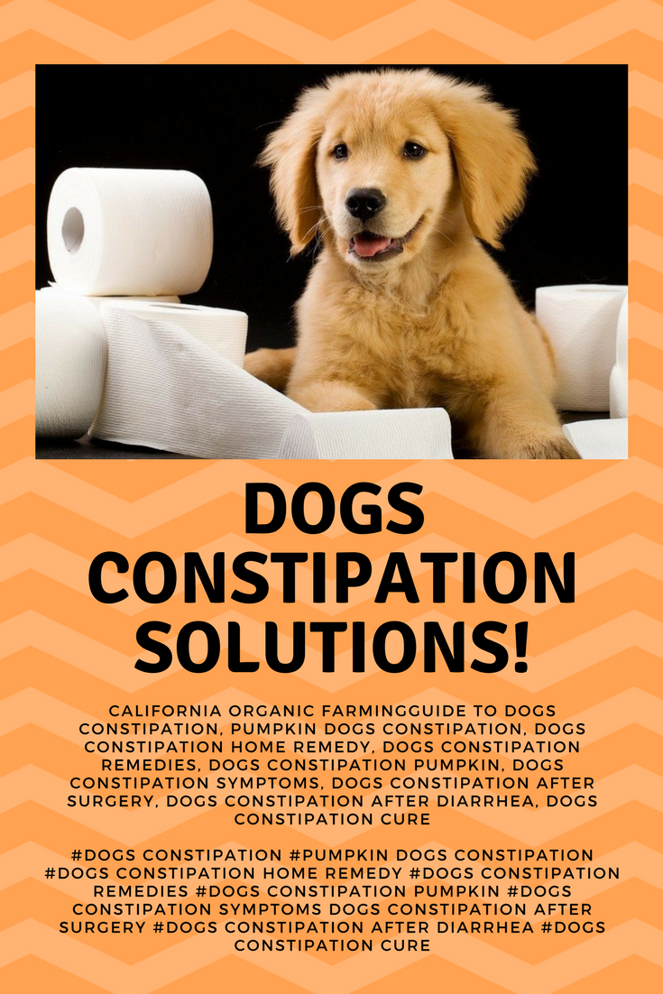 pumpkin dog constipation how much