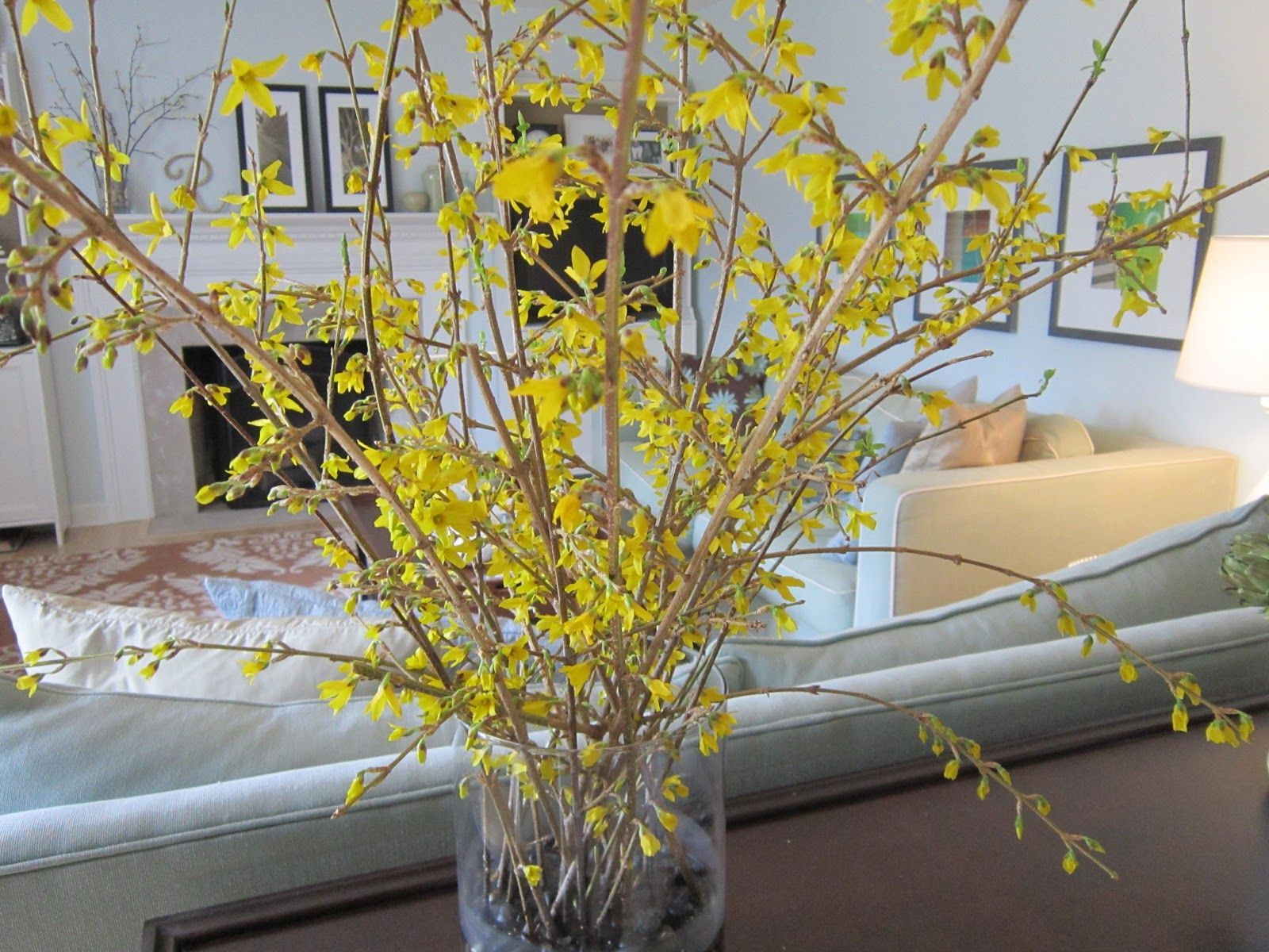 spring flower arrangements forsythias are the easiest to get to bloom early inside - Forsythia Arrangements
