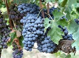 These are grapes that are traditionally grown in center France called Cabernet grapes.