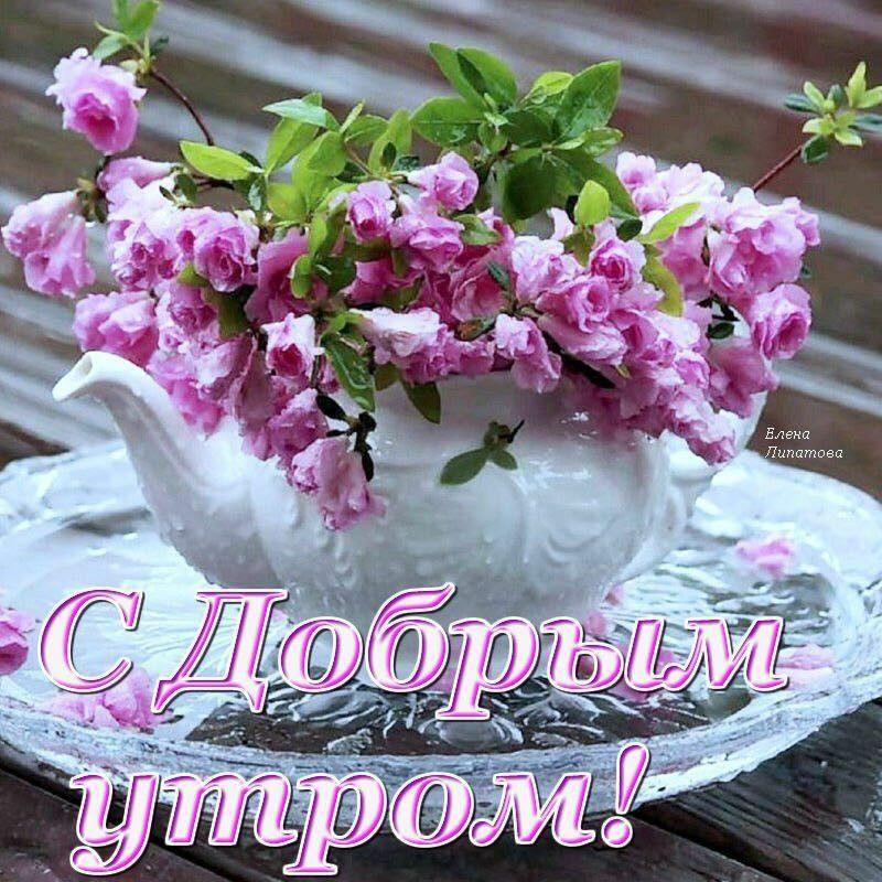 Цветы доброго утра картинки прикольные